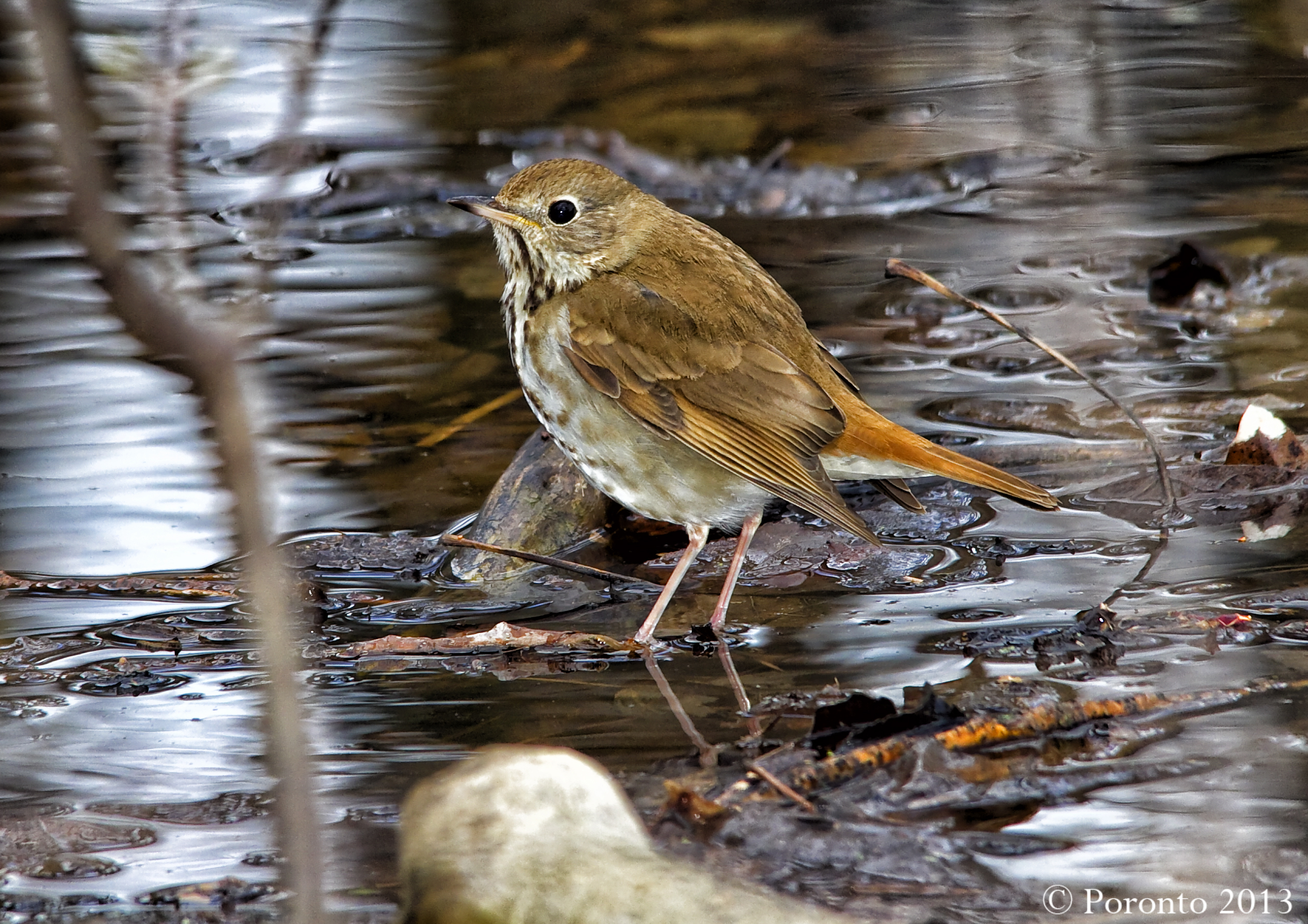 Using a tonal contrast tool in photoshop... I like the change to the water... thrush?