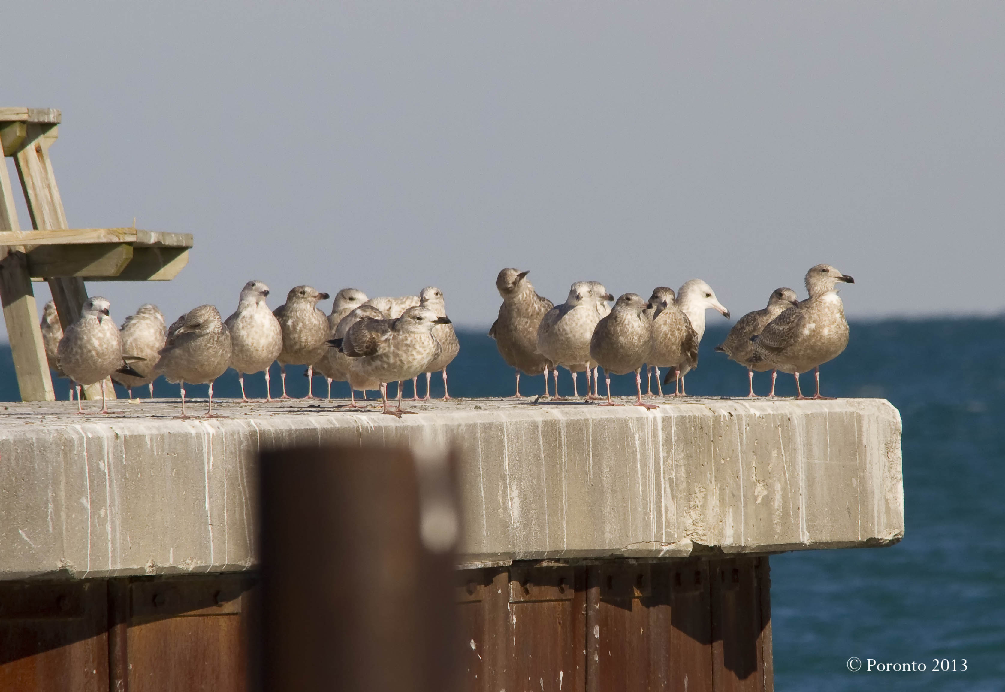 This was the spot for all the young Gulls to hang out